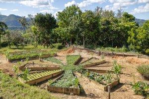 Farm in Cuba